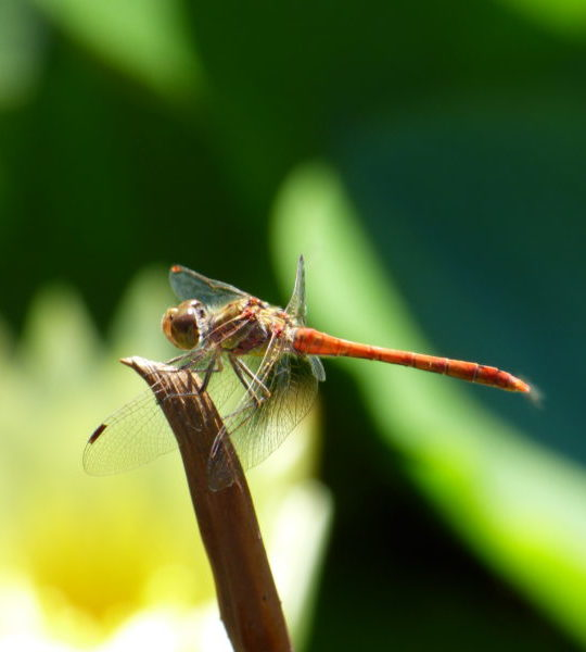 A dragonfly in an eco-responsible nature campsite in the Aude