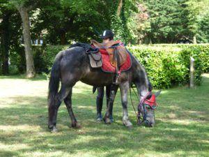 randonneur a cheval